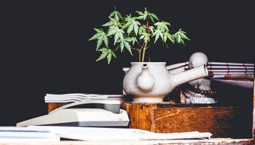 Wiet: 7 tips voor gegarandeerd succesvol koken met wiet